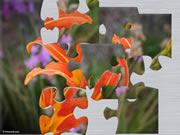 orangelily.jpg