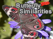 Butterfly Similarities