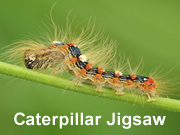 Caterpillar Jigsaw