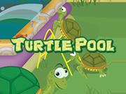 Turtle Pool