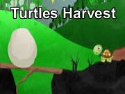 Turtles Harvest