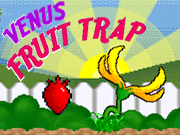 Venus Fruit Trap