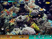 Hidden World Underwater
