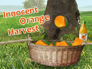 Innocent Orange Harvest