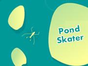 Pond Skater