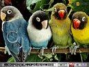 Hidden Alphabets-Parrots